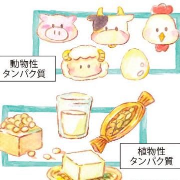 必須栄養素『たんぱく質』で、綺麗をGET!の画像